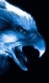 Portret użytkownika eagle