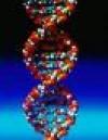 Portret użytkownika DNA.