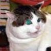 Portret użytkownika faficze