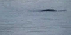 Loch Ness Monster Spotted?  Nessie New Footage! 6/3/07