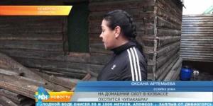 На домашний скот в Кузбассе охотится Чупакабра
