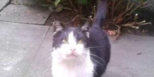 кошка, kot, cat, Katze,