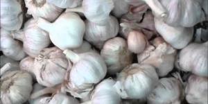 česnek, czosnek, alia, garlic, Knoblauch, чеснок, vitlök,