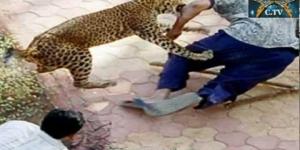 Man Eating Leopard Devours 15 Villager in Nepal